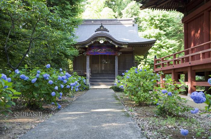 140614_神社.jpg