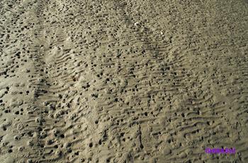 20140129_穴と足跡がいっぱい.jpg