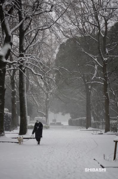 20140208_雪でも散歩.jpg