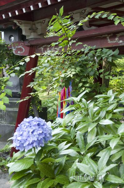 20140725_紫陽花.jpg