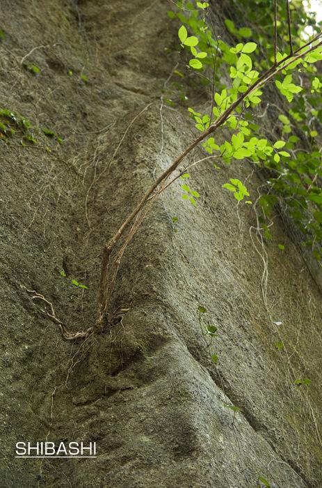 木のチカラ.jpg